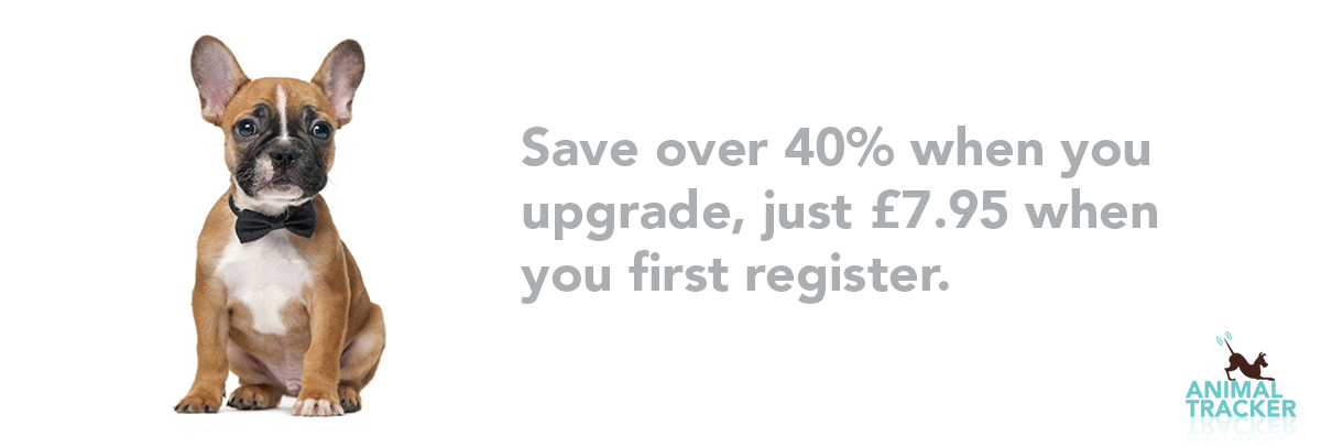 Save over 40% when you upgrade online